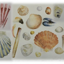 Shells: Natural History Illustration Course with Tereska Shepherd